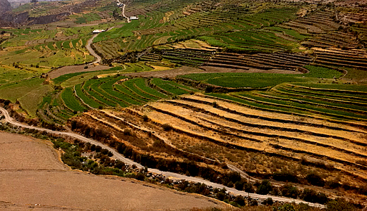 Arequipa Countryside Terracing