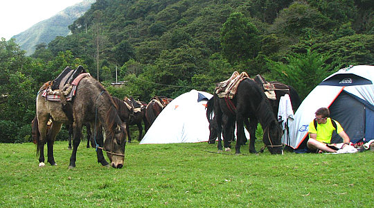 Camping Tour In The  Cloud Forest Of Peru