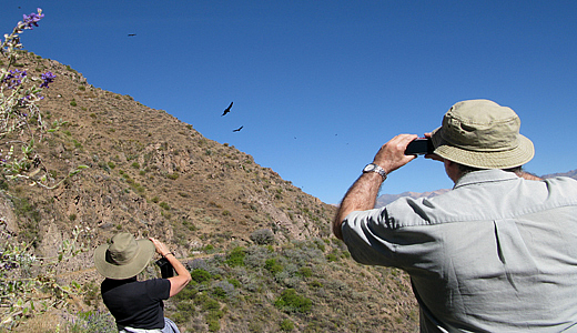 Colca Condor Watching Point