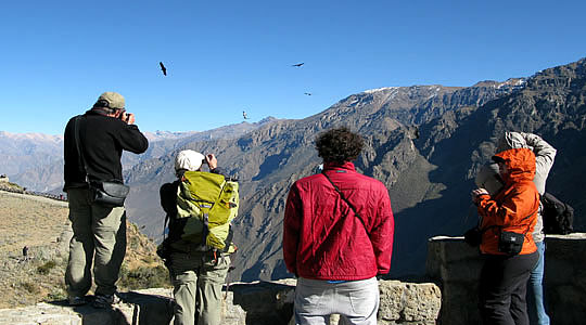 Condor Party At The Colca Canyon