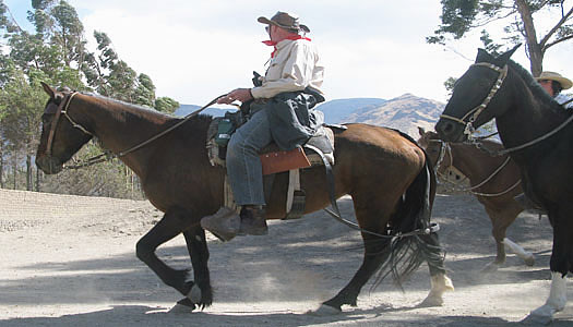 Riding Peruvian Paso Horses