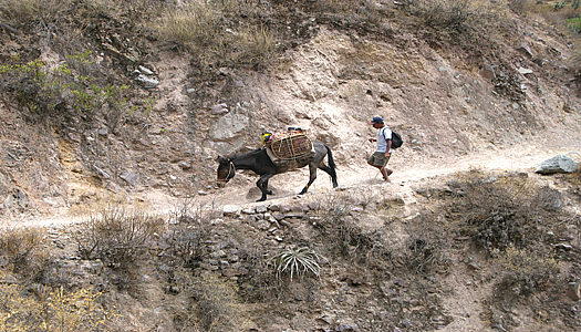 Horsemen In The Colca Canyon