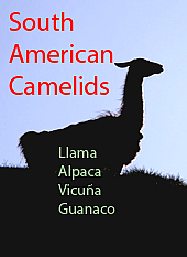 Information South American Camelids