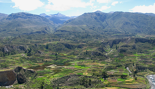 Tours In The Colca Valley