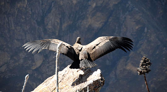 Colca Canyon Tour Recommendations