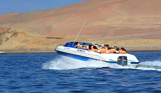 Best Ballestas Islands Tour